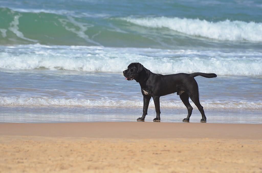 spiagge per cani al lido di venezia